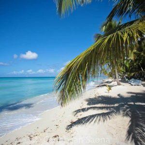 Isla Saona Playa Palmera